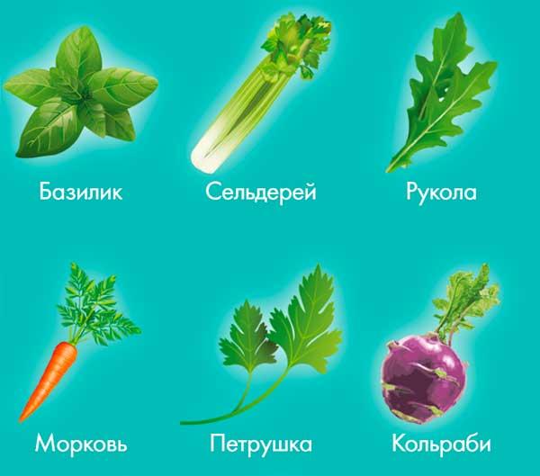 коллекция-растений